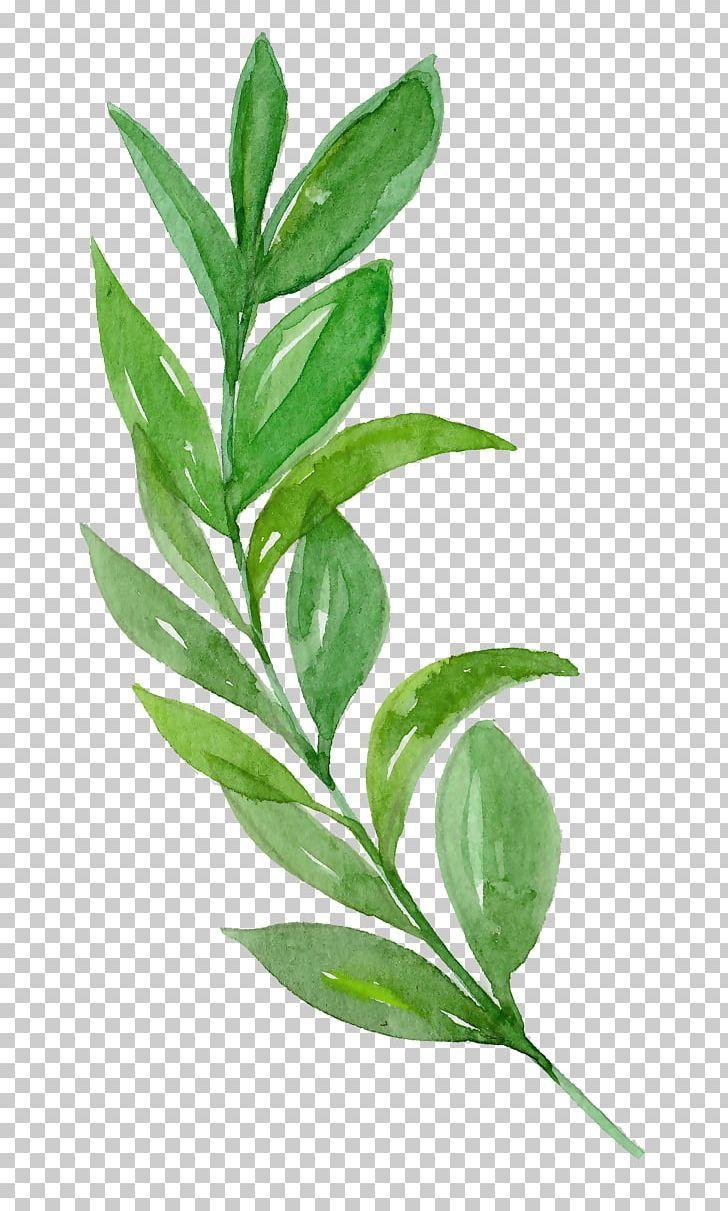 Libya Ink Leaf Png Acuarela Hojas Branch Coreldraw Download Encapsulated Postscript Leaf Illustration Paper Background Texture Paper Background Design