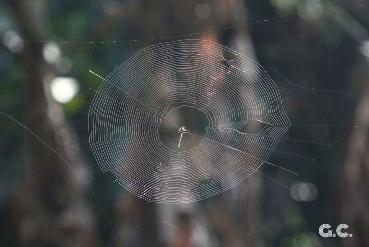 Spider Web, Dąbrowa Górnicza, Poland