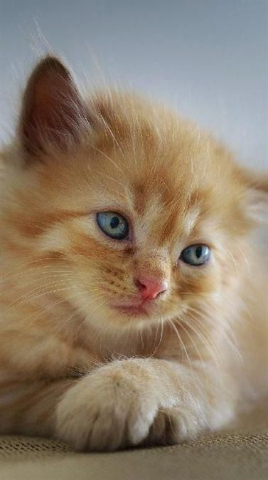 Dumme süße Kätzchen müde # süß # Tiere # Katzen # süßeste Kätzchen   – Cats