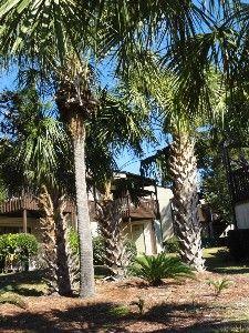 Gulf Resort Beach Condo Rental: * Portside Resort Amazing 2 Bedroom Condo *all New Furniture*now August Specials | HomeAway