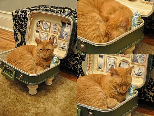 homemade pet furniture | 100 DIY Home Projects - From Homemade House Forts to Vintage Suitcase ...