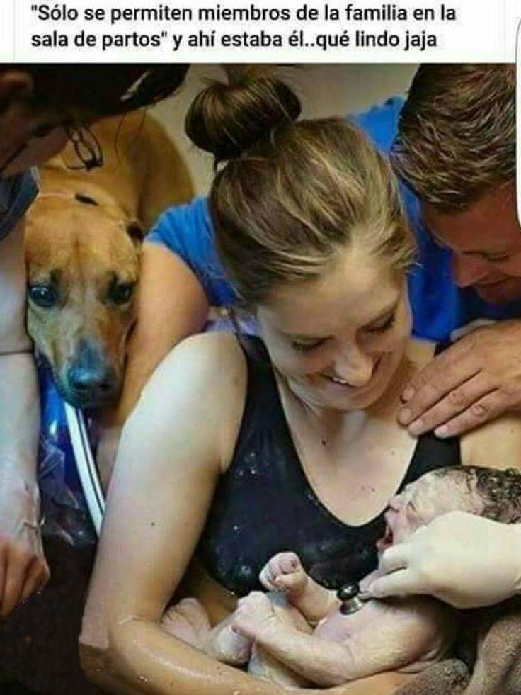 Sólo se permiten miembros de la familia en la sala de partos y ahí estaba este perro  #perro #perros #animales #animal #foto #fotos #mascotas #mascota #bebe #niño #hospital #cachorro #cachorros #noticia #noticias #dog #dogs #schnauzi
