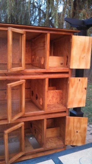 Quail Cages only tilted so eggs are easy to get and open from back instead of side on coop