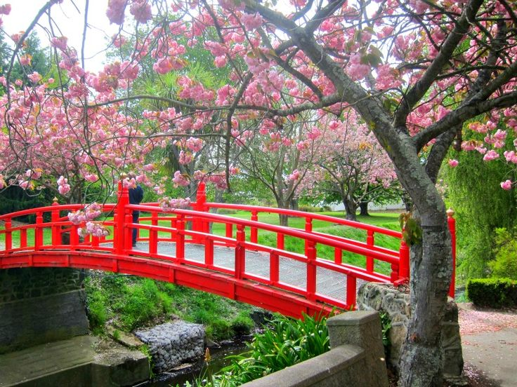 Japanese Garden Cherry Blossom Bridge red gardens in japan | beautiful traditional red bridge in