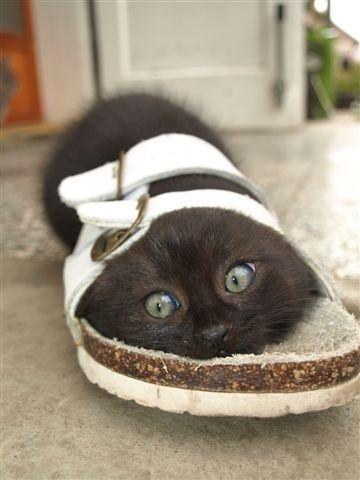 kittens love sandals