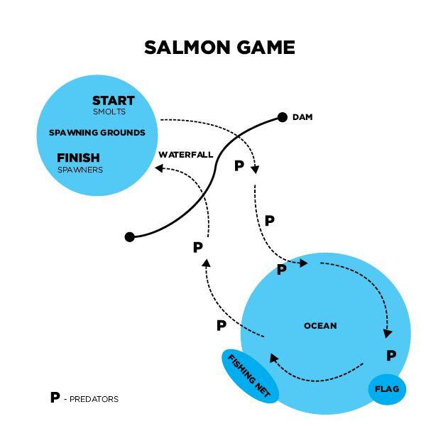 In this game, students will act out the salmon life cycle from fry to spawners. They have to survive in the wild!