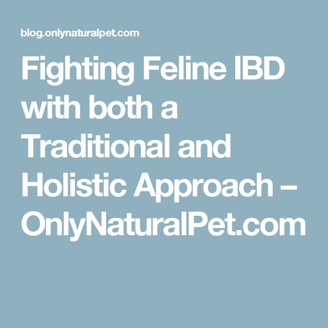 Fighting Feline IBD with both a Traditional and Holistic Approach – OnlyNaturalPet.com