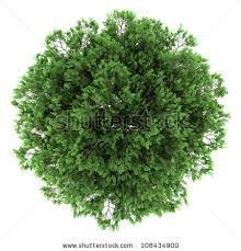 Resultado de imagem para trees top view