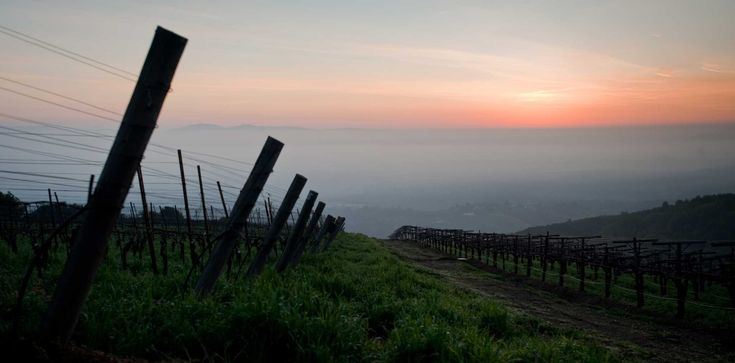 Pinot Noir fans will surely enjoy a visit to the Santa Cruz Mountains.