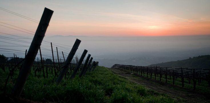 Pinot Noir fans will surely enjoy a visit to the Santa Cruz Mountains.