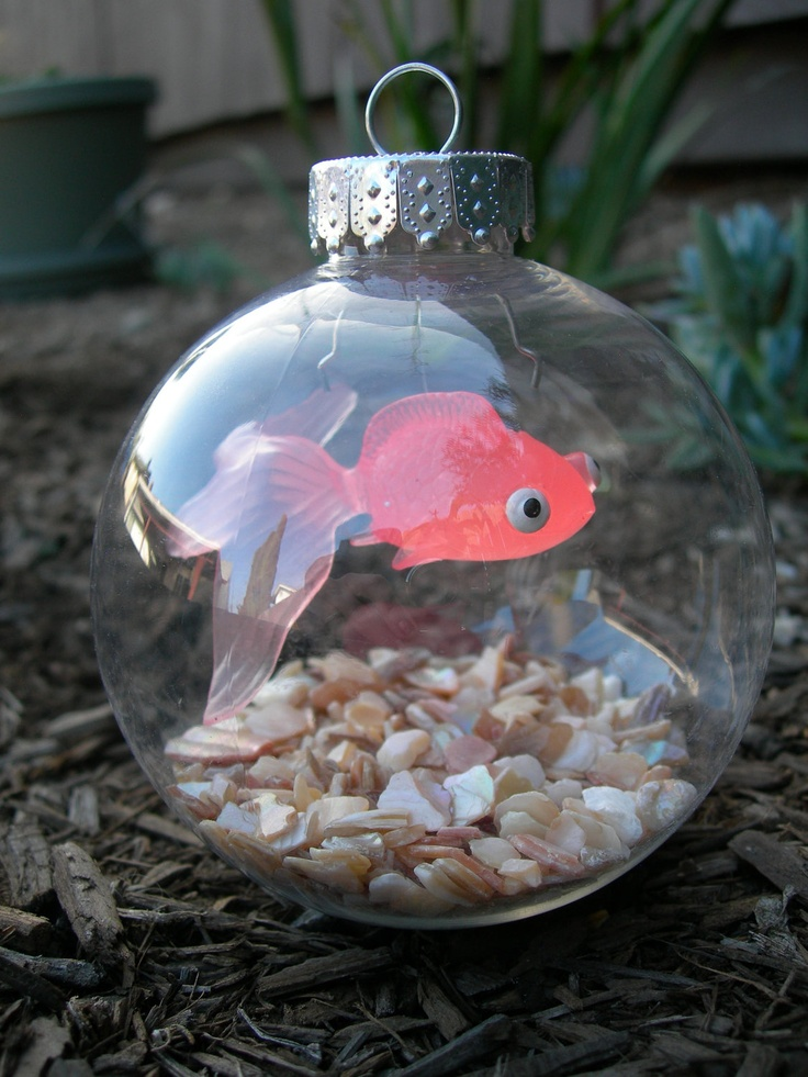 58 best images about goldfish photos art on pinterest for Best fish for bowl