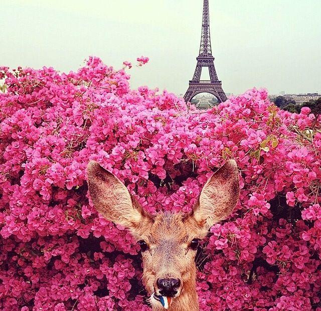 Vous aimez Paris