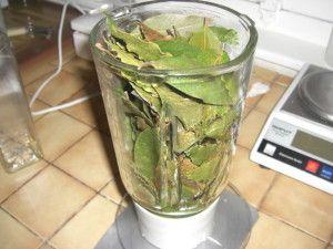 Gépadsous : simili huile de laurier - 100 % Plantes Ma Passion