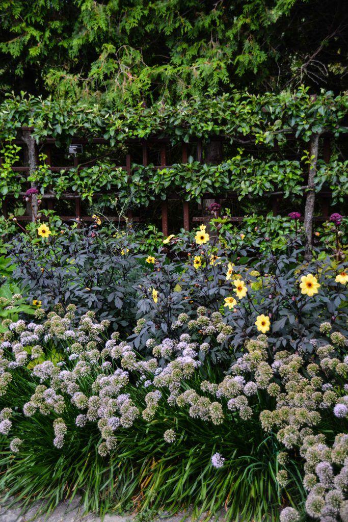 Olbrich Botanical Gardens   Madison Wisconsin, Thinking Outside The Boxwood  | Jardineria | Pinterest | Madison Wisconsin And Gardens