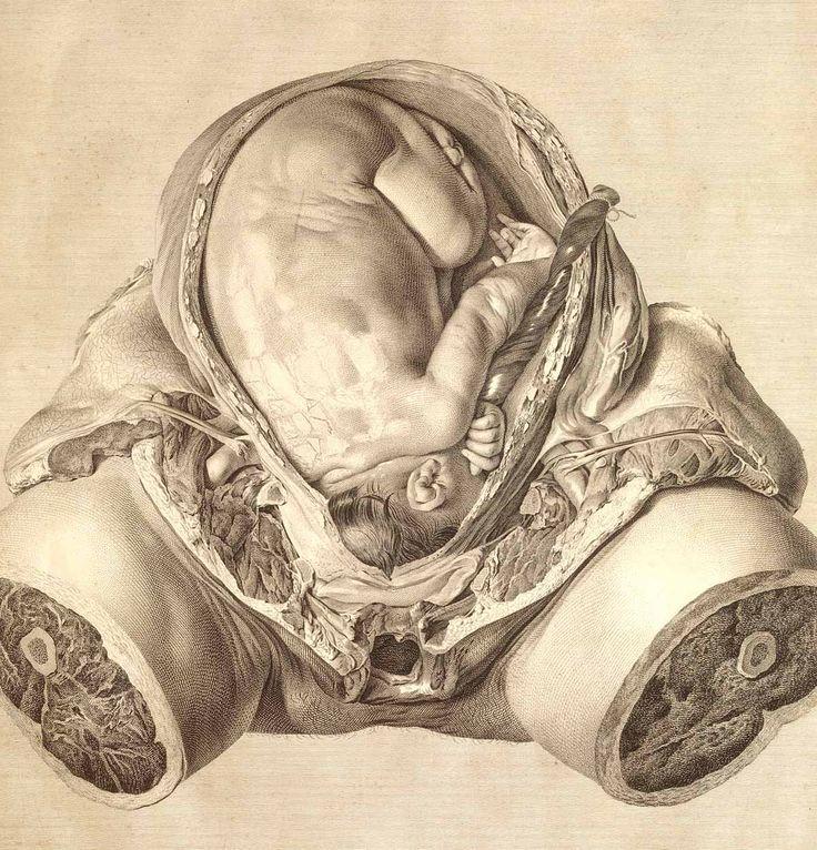 Birth!: Anatomy Drawings, Williams Hunters, Vans, Vintage Medical, Illustration, Baby, Births, Human Body, Vintage Image