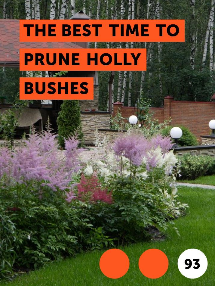 The Best Time To Prune Holly Bushes With Images Plants