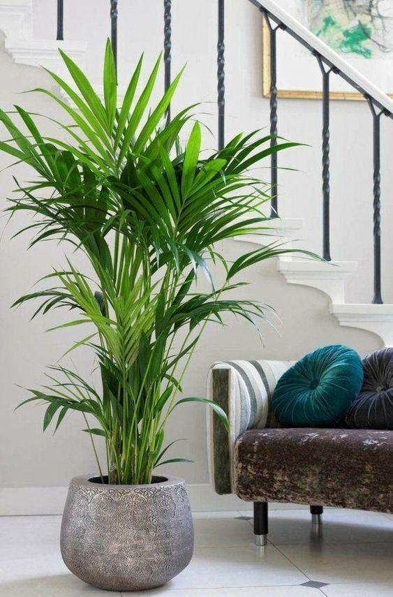 Dekorationsideen für Räume mit großen Pflanzen – Einrichtungs Ideen