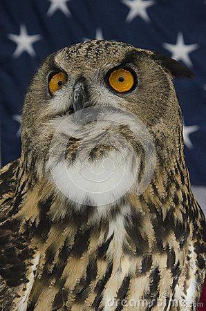 Close-up of a great horned owl in front of a field of stars.
