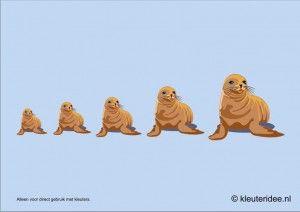 Zeehonden meten met kleuters, hoek voor poolonderzoekers, kleuteridee.nl , thema Noordpool & Zuidpool, free printable.