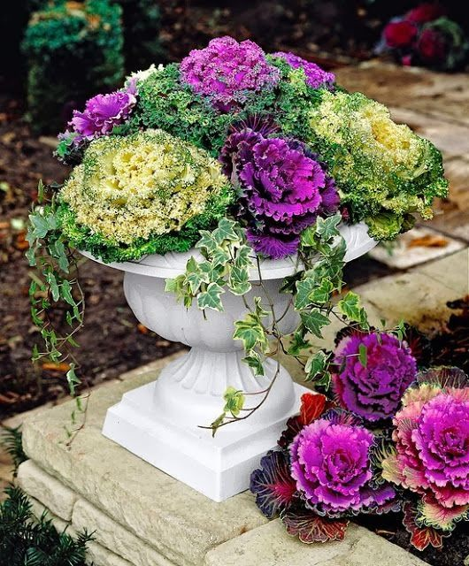 Fall urn. Container planting. Kale & ivy.