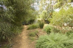 Clarence Park Community Centre biodiversity garden