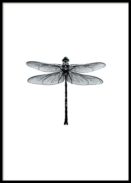 Beautiful poster of black and white dragonfly. Looks super stylish framed on the wall, either by itself or as part of a wall art collage. www.desenio.com
