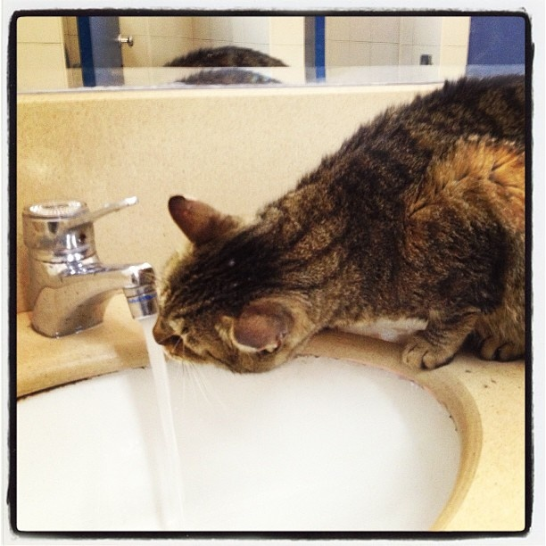Cat drinking in the first floor bathroom at the Humanities building at Tel Aviv University.  Instagram photo by @osnatshine (osnatshine)