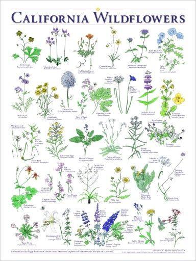 California Wildflowers 18″ x 24″ print