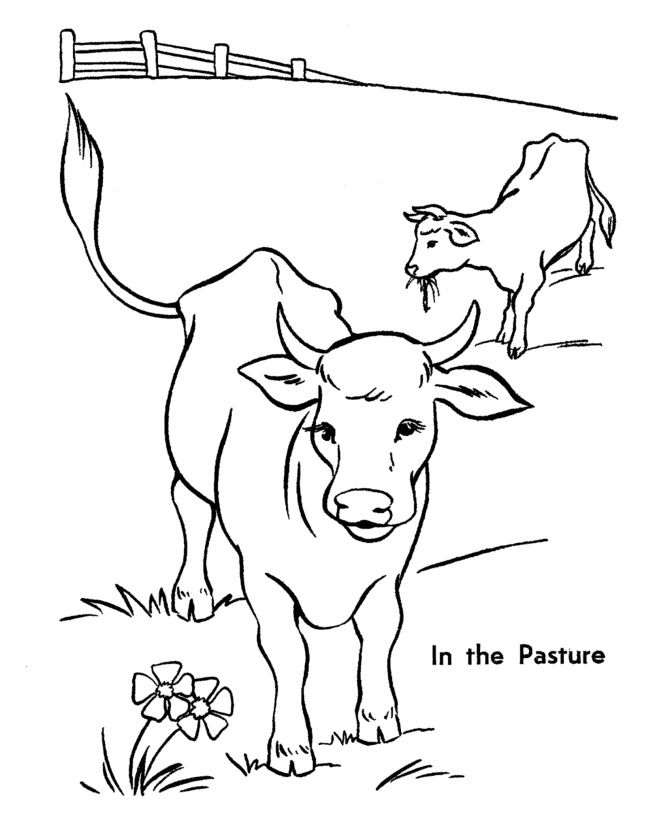coloring beef cow pages - photo#14