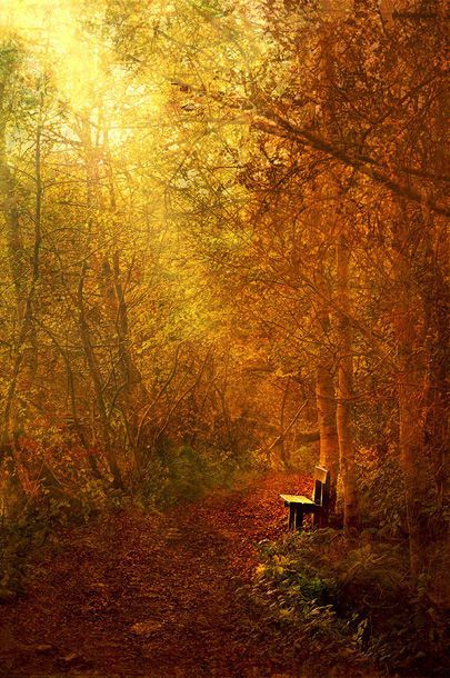 Meditation Spots, Forests Benches, Fall Colours, Colours Warm, Autumn Lights, Favorite Seasons, Golden Benches, Fall Pathways, Beautiful Warm