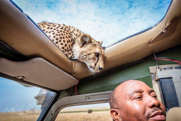 Guépard Safari Tanzanie photo -  Bobby-Jo Clow
