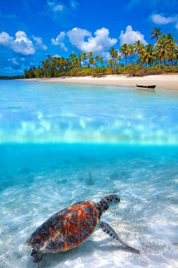 in 2019 Ocean Beach Beautiful places
