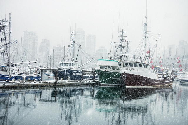 Winter Fish by Mark Faviell Photos, via Flickr