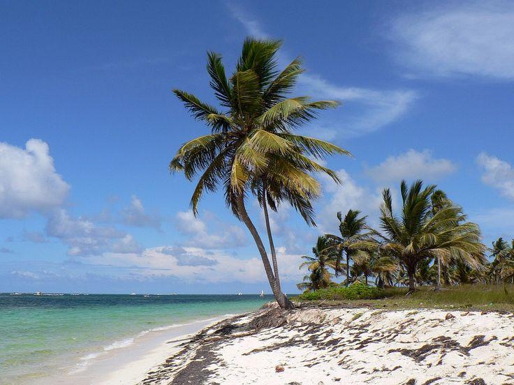 Dominikánská Republika, Punta Cana, Beach, Kokos, Moře