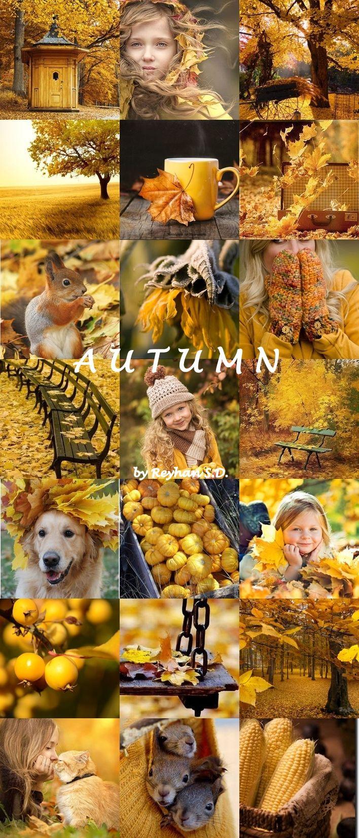 '' Autumn Shades of Yellow '' by Reyhan Seran Dursun