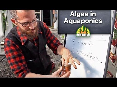 Controlling Algae in Aquaponics - YouTube