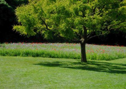 Bloemenweide, meadow, les jardins de Valloires, Normandie.