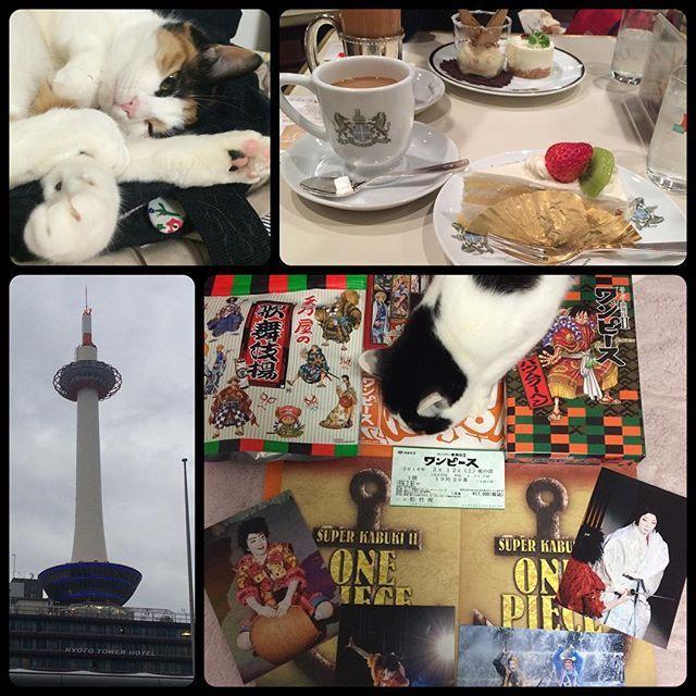 ただいまー!34時間ぶりのただいまぁぁぁ‼︎「あたちらより孝彦か…?」「ま、まさか春場所まで…?」 いえいえ、大相撲はさすがに笑 がおーさん(姉君)に会ってたら遅くなりました。#cat #cats #calicocat #cowcat #ねこ #猫 #ワンピース #歌舞伎 #kabuki #スーパー歌舞伎II #市川猿之助 シャンクスかっこよかった❤︎meronecoz2016/03/13 21:45:40