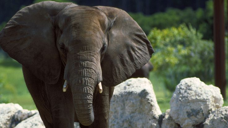At over 100 acres, the Los Angeles Zoo is one of the of the area's largest and most celebrated attraction La zoo coupons http://www.pinterest.com/TakeCouponss/la-zoo-coupons/