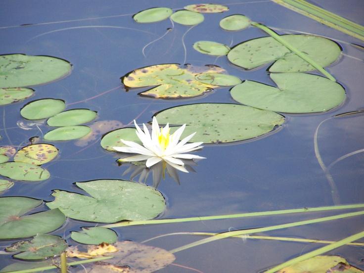 Una flor no fa estiu..o potser si