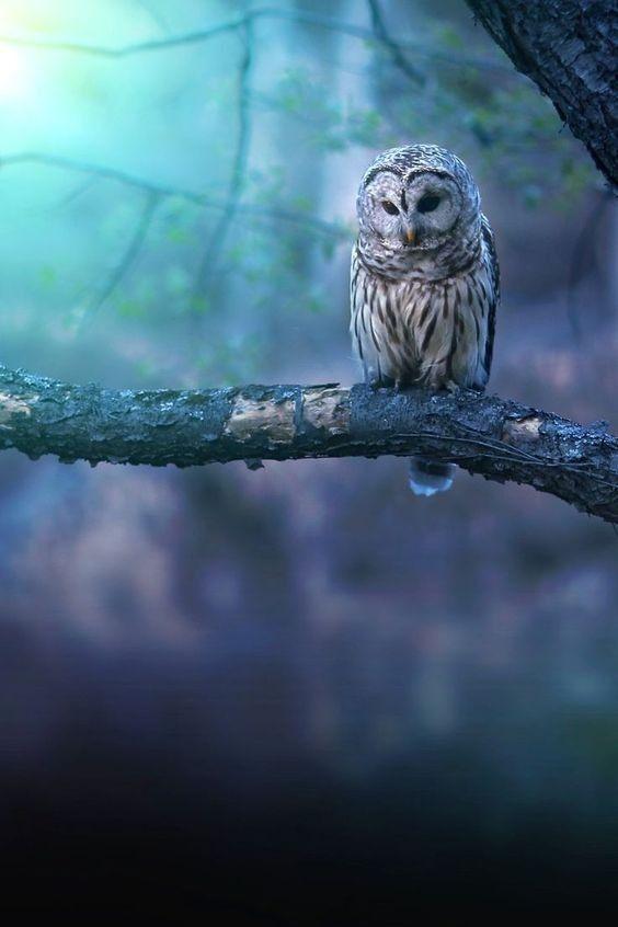 Фото с совой, сидящей на ветке дерева #картинки#фото#животные#птицы#сова#owl#хищники#ночь