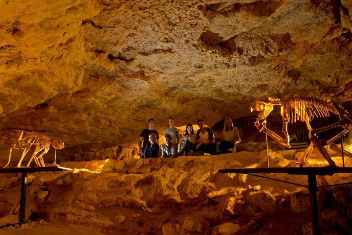 Naracoorte Caves, Limestone Coast