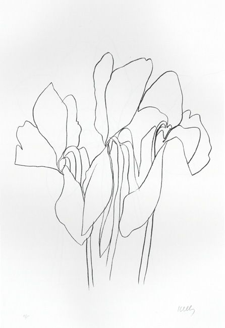 Contour Line Drawing Of A Plant : Best images about ellsworth kelly drawings on pinterest