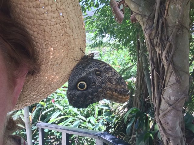 Relax: Stay Still Enough for a Butterfly to Land - St. Martin Butterfly Farm