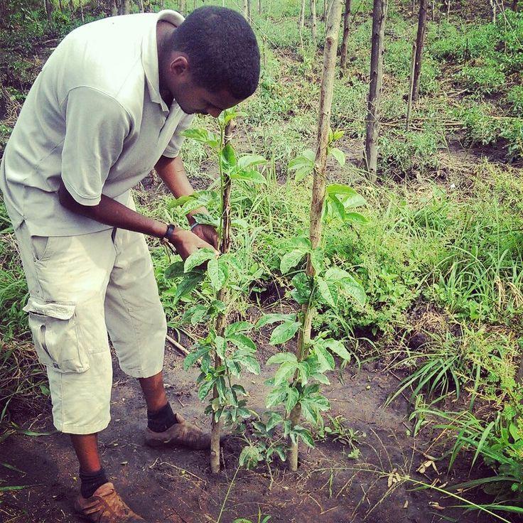 Passion Fruit farming