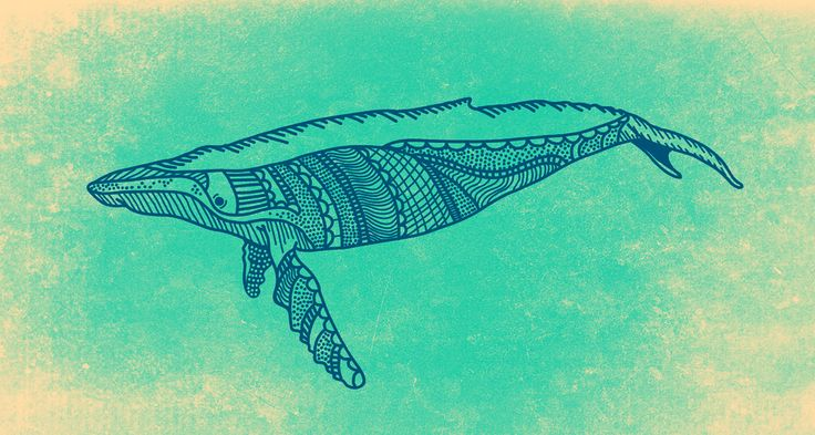 Whale Shark Line Art : Quot the whale illustration creativepanic