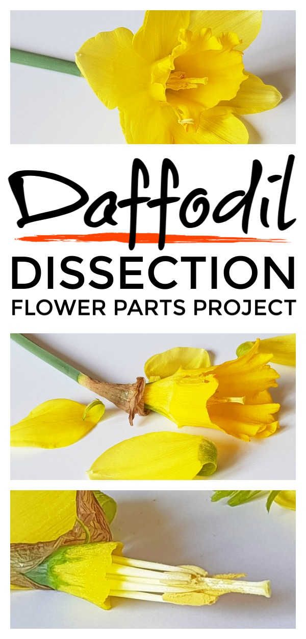 Flower parts – awesome flower parts project activity for kids that helps them understand the plant s…