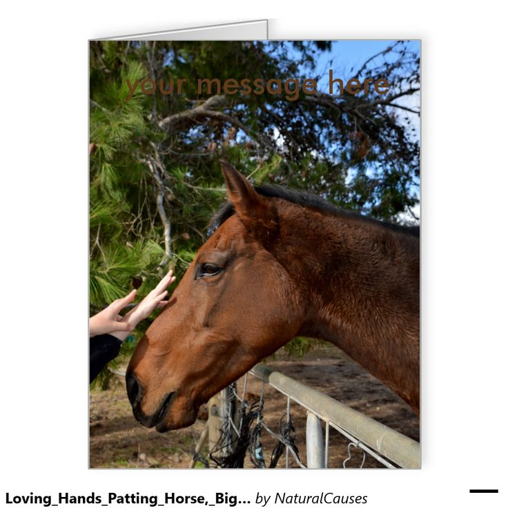 263 best horse horse giftshorse watcheshorse gift ideas brown horse called bennie loving a pat card negle Image collections