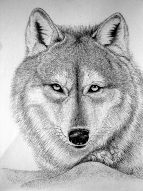 I Draw Wild Animal Faces And I Do Art Shows And License