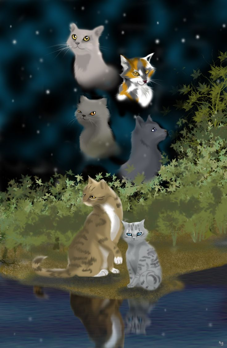 Find This Pin And More On Warrior Cats!